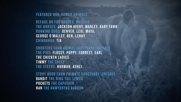 animalcharacters-grab1