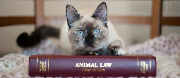Animal Law Cat - 1000x434