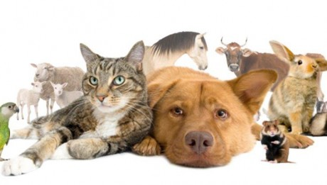 CFHS Animal Banner