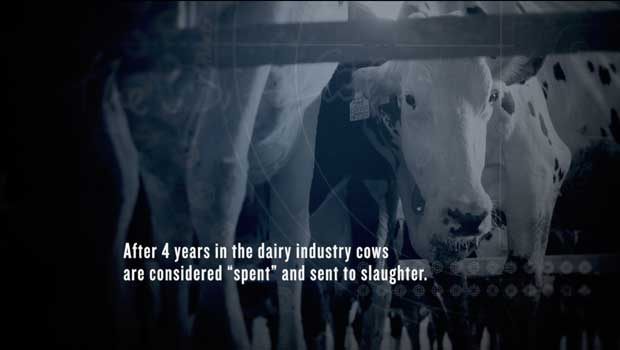 TGIOM-dairy