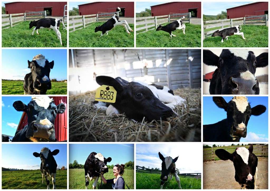 Photo collage by Susie Coston. Center photo by Jo-Anne McArthur / We Animals for The Ghosts In Our Machine