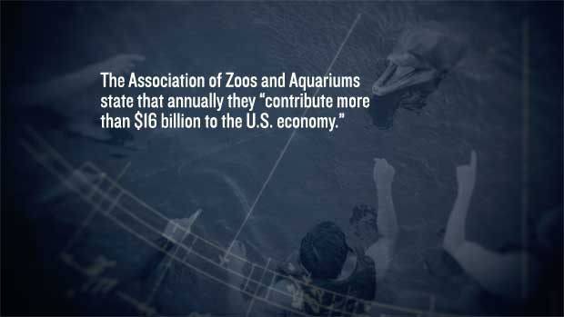 LEARN MORE - Non-Human Animals Used fro Entertainment