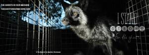 Fur-Fox-Black